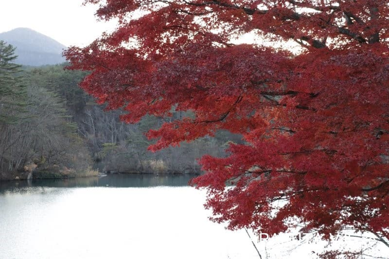 毘沙門沼(Bishamon-numa)(五色沼湖沼群)(福島県耶麻郡北塩原村)