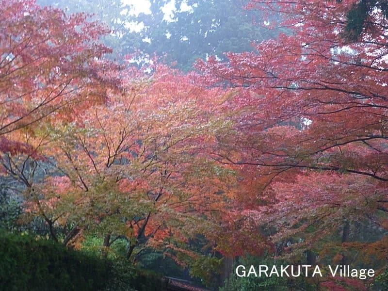 中尊寺 (Chūson-ji Temple)(岩手県西磐井郡平泉町)